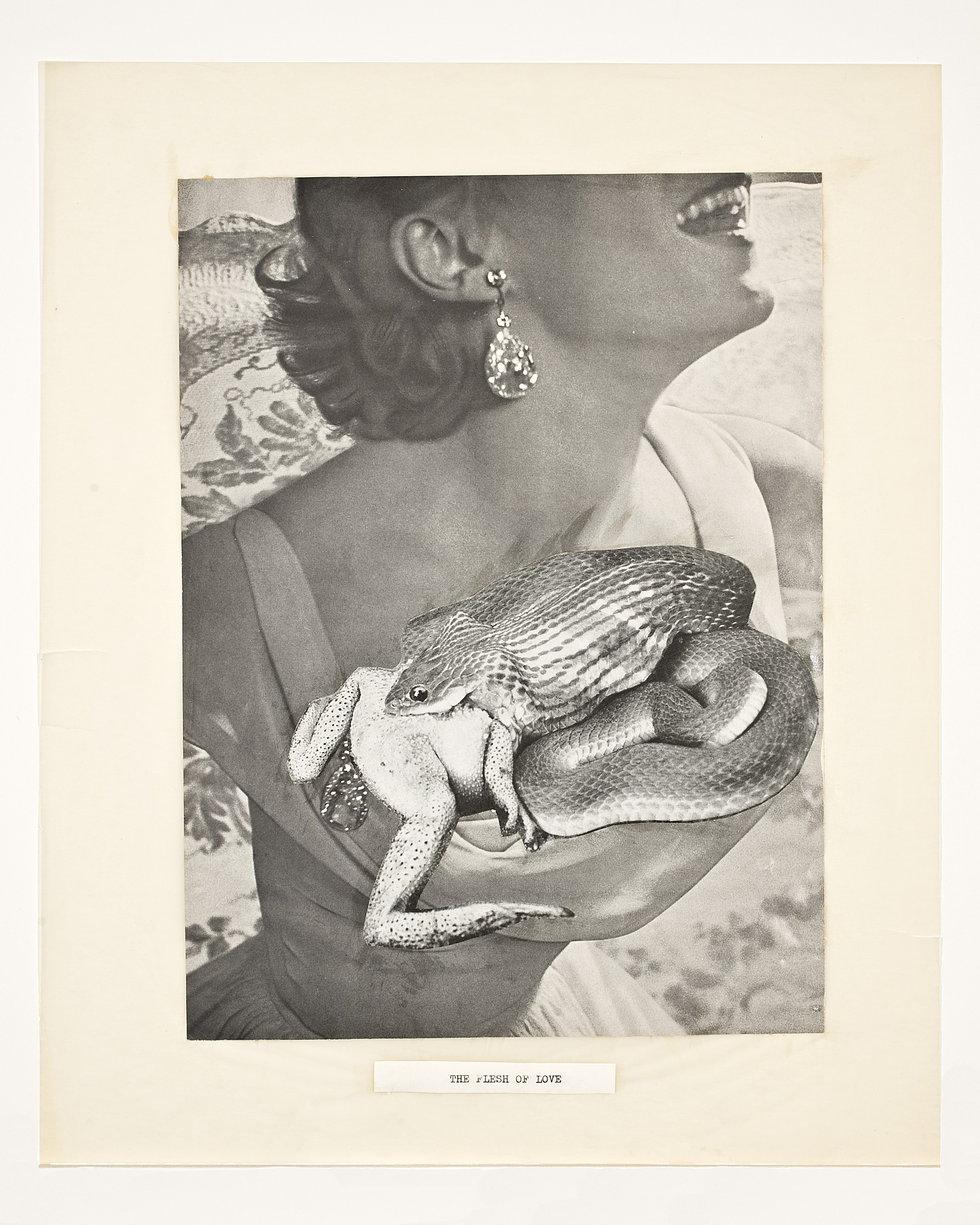 "A woman's body in a gown in the background (cut off above the mouth and below the waist), pasted on top of the woman's chest is a curled snake, with a frog eating another frog pasted on top of the snake. At the bottom, the words ""THE FLESH OF LOVE."""