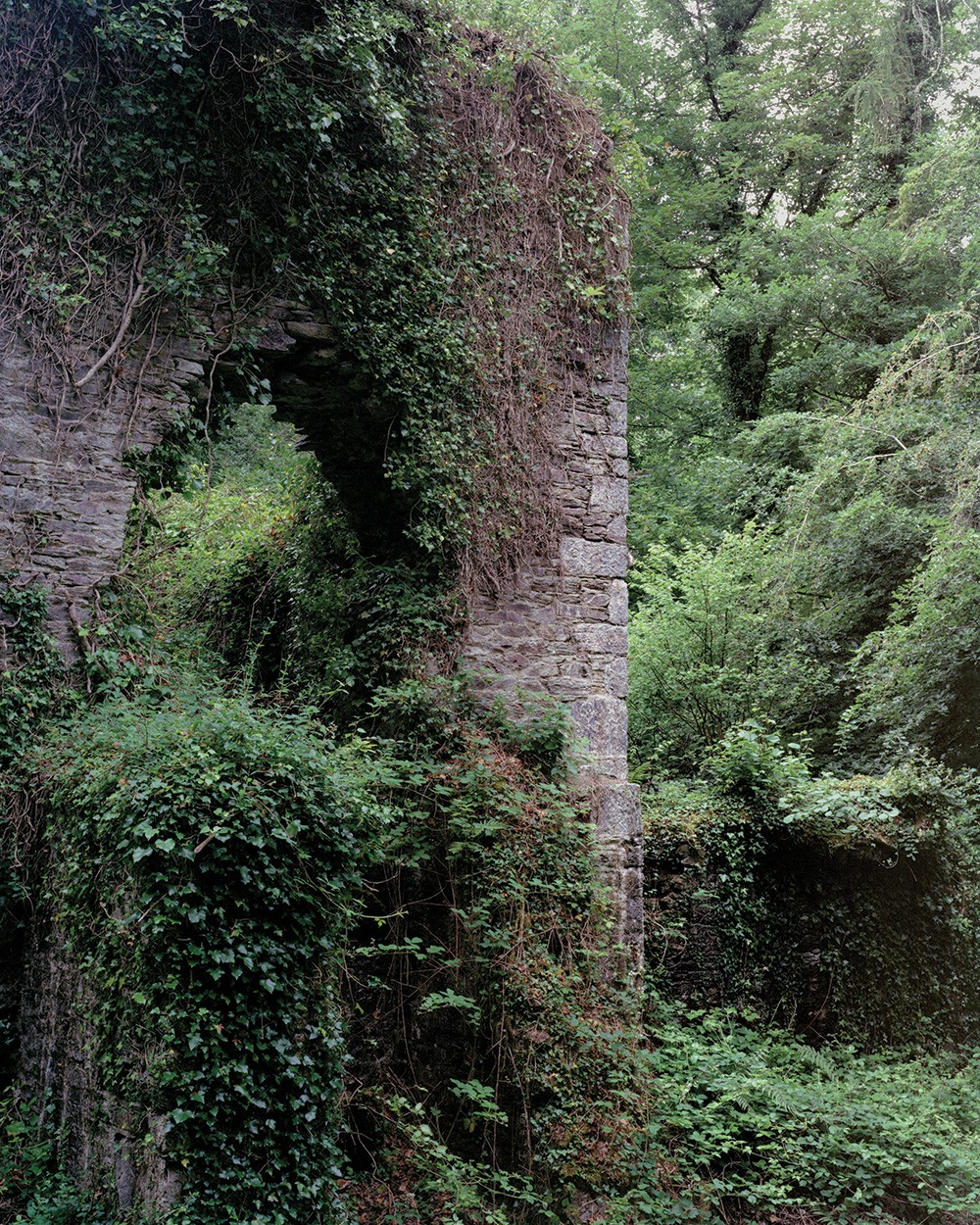 A photo of a tall stone structure overgrown with plants in a forest.