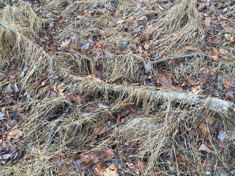 Dead grasses, tree limb, and leaves on the ground.